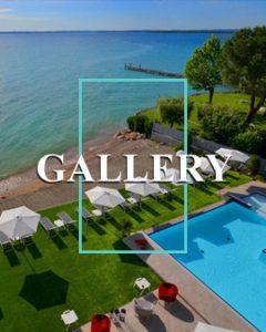 gallery ocelle