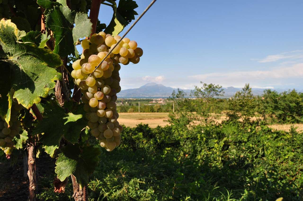 degustazione vini lago di garda lugana