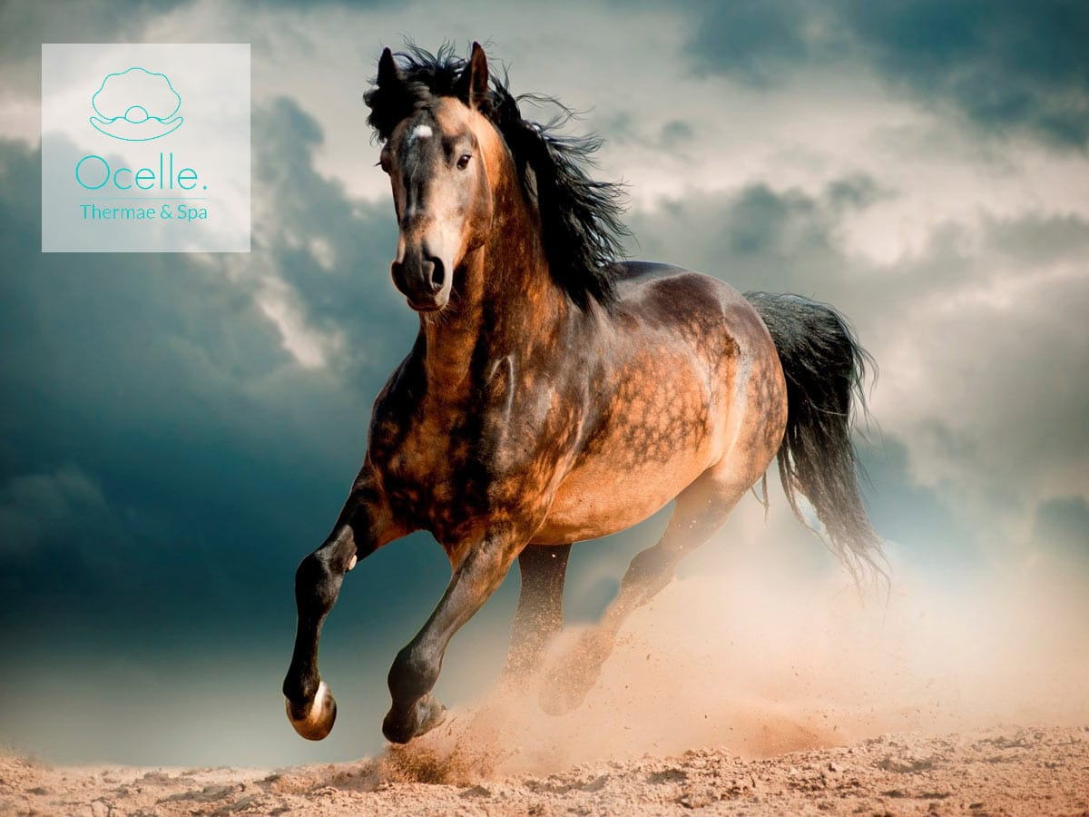 hotel vicino fiera cavalli verona