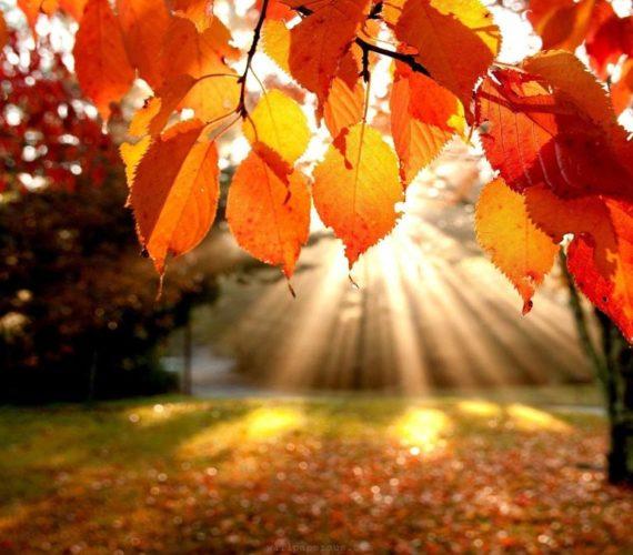 Godiamoci l'autunno